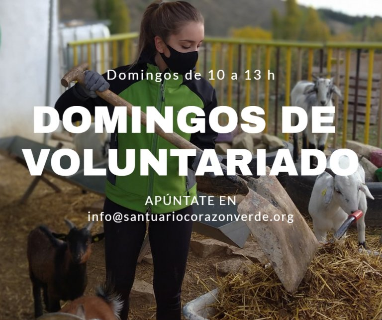 Domingos voluntarios