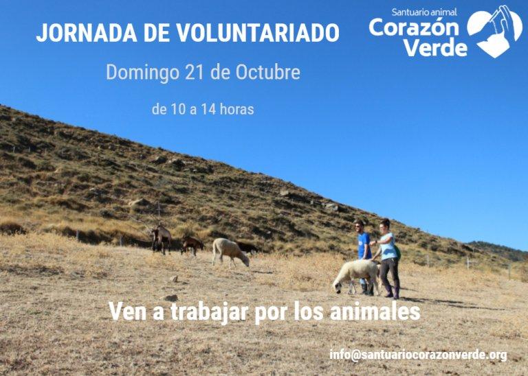 Voluntariado en Octubre