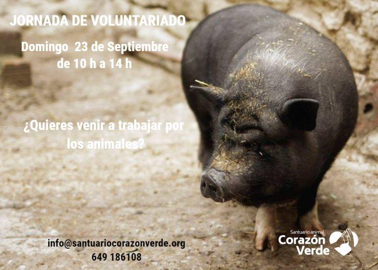 Voluntariado en Septiembre